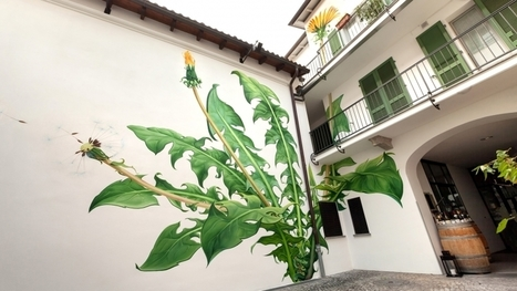 Mona Caron's Murals of Weeds Slowly Overtake Walls and Buildings | What Surrounds You | Scoop.it