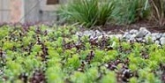 Advanced Green Architecture - The World of Green Roofs has Changed. | Vertical Farm - Food Factory | Scoop.it
