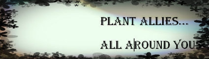 Plant Allies All Around You, 1st Pervasive Game for Herbalists #herbalismo #seriousgames | World Changing Games | Scoop.it