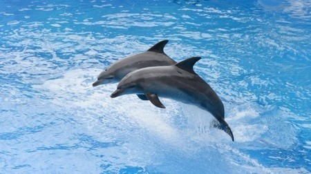 Dolphins inspire a new bomb-detecting system | Five Regions of the Future | Scoop.it