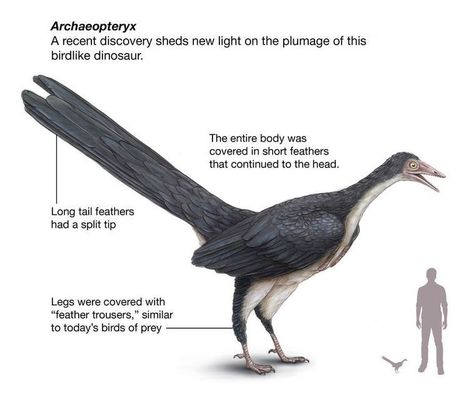 Dinosaur-Era Fossil Shows Birds' Feathers Evolved Before Flight | Geology | Scoop.it