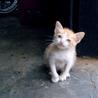 Cat flea and tick control
