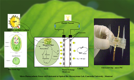Micro Photosynthetic Power Cells may be the Green Energy Source for the Next Generation (World Scientific)   Science&Nature   Scoop.it