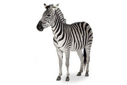 Will Google Zebra Hit Social? A Possible New Google Algorithm Update | Social Media Marketing Strategies | Scoop.it