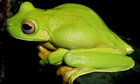 New Guinea's newly discovered species - in pictures | HINGOL NATIONAL PARK! | Scoop.it