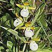 Quarante et une nouvelles orchidées des milieux tempérés désormais menacées d'extinction - Faune, nature, zoos & biodiversité | Réseau Tela Botanica | Scoop.it