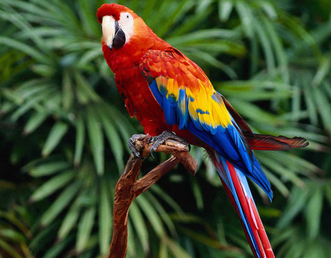 20 Cute Parrot Pictures | Incredible Snaps | All Informations | Scoop.it
