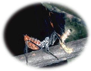 (EN) - Entomology 2040 Glossary | Auburn University | Glossarissimo! | Scoop.it