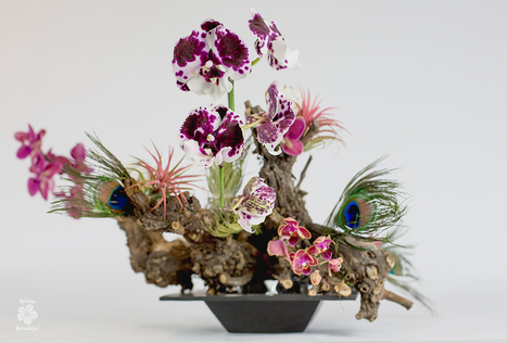 Grapevine Wonders • Ikebana Beautiful | TRENDBUBBLES | Scoop.it
