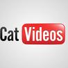 les meilleures videos du net