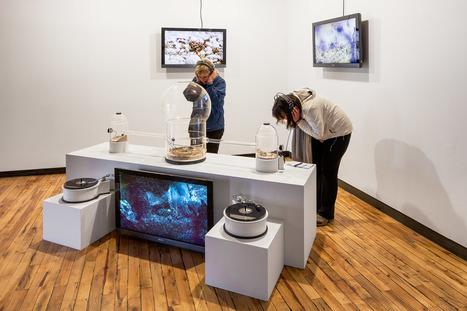 InterAccess gallery| Where art and teck meet /// #mediaart #artsci | Digital #MediaArt(s) Numérique(s) | Scoop.it