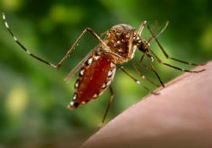 WHO calls on countries to prepare as Zika virus expected to spread in Europe in late spring and summer   Zika Virus News   Scoop.it