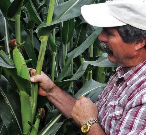 Halting Nutrient Runoff While Perfecting Fertility | Organic Farming | Scoop.it