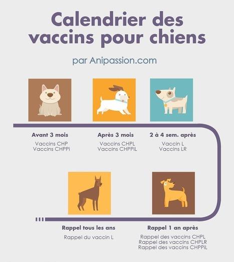 Vaccin Chiot Calendrier.Prix Des Vaccins Pour Chien Animaux De Compag