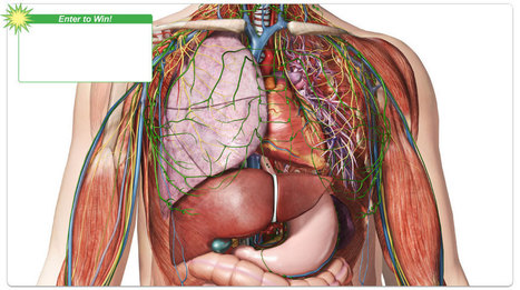 Visible Body 3d Human Anatomy Simulation In