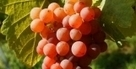 Vin : La vérité sur les productions biologiques   Vins bio   Scoop.it