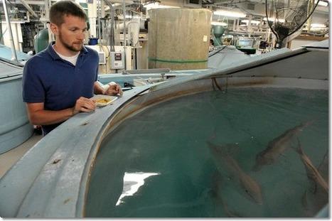 plant based fish food | Aquaponics~Aquaculture~Fish~Food | Scoop.it