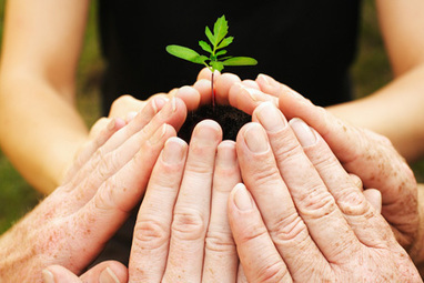 Planting Seeds For Your Organization's Growth | WinMax Negotiations | Scoop.it