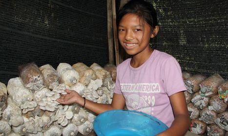 Mushroom cultivation in The Third World, Page 2 | Scoop it