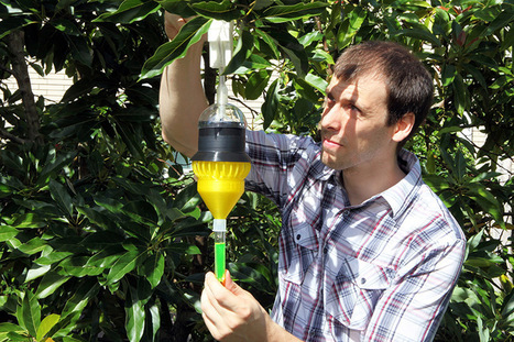 Florida Scientific Research Team Develops 3D Printed Insect Trap to Stave Off Crop Damage | Citrus Science | Scoop.it