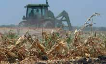 Record cereal prices stoke fears of global food crisis | Unit 6 (Agriculture) | Scoop.it