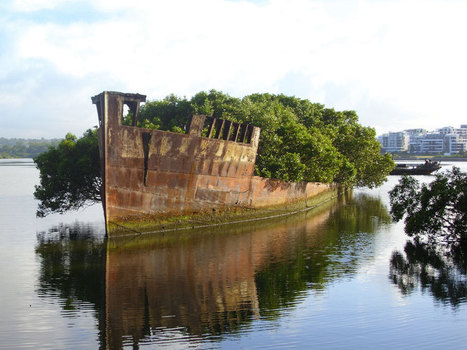 102-Year-Old Ship in Sydney Became A Floating Forest   Earth Citizens Perspective   Scoop.it