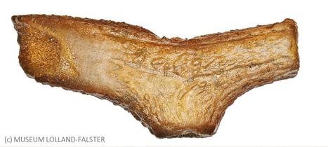 DANEMARK : Danish antler axe find reveals Neolithic German trade | World Neolithic | Scoop.it