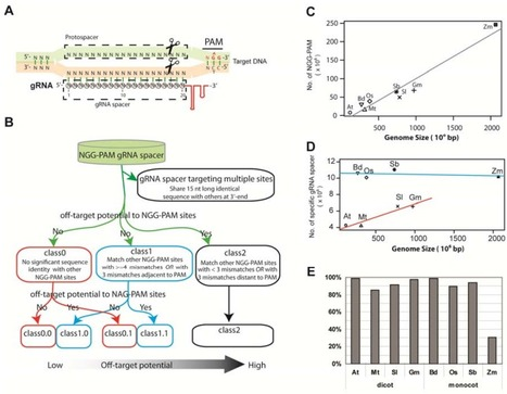 Genome-wide prediction of highly specific guide RNA spacers for the CRISPR-Cas9 mediated genome editing in model plants and major crops | Multi- gene | Scoop.it