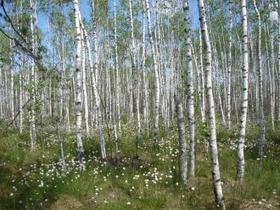 L'Ukraine inscrit deux nouveaux Sites Ramsar | Zones humides - Ramsar - Océans | Scoop.it