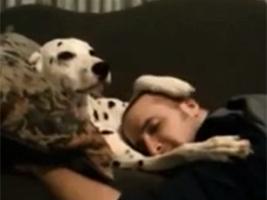 On inverse les rôles : ce chien cajole son maître ! (VIDEO)   CaniCatNews-actualité   Scoop.it