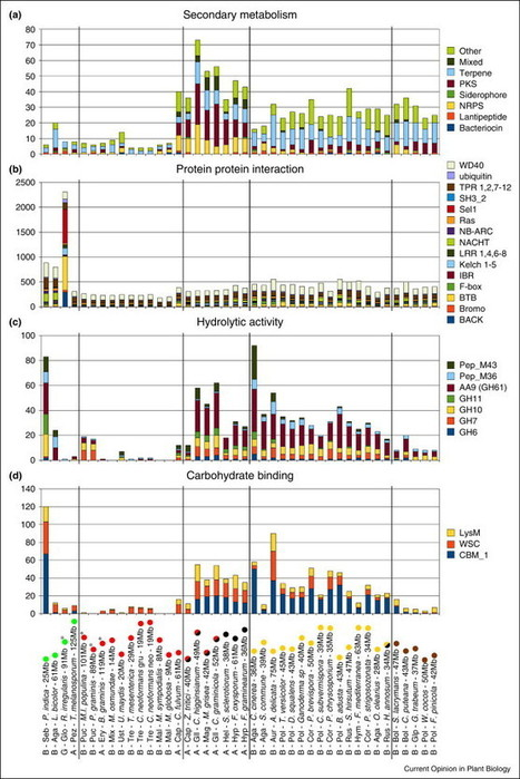 Broad compatibility in fungal root symbioses | Mycorrhizal fungal genomes | Scoop.it