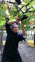 Un vin taiwanais remporte une médaille d'or aux Vinalies internationales | Articles Vins | Scoop.it