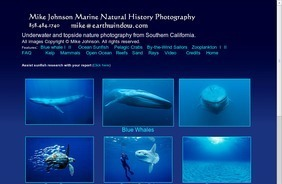 Mike Johnson Marine Natural History Photography Underwater Photos of blue whales ocean sunfish tuna crabs zooplankton and other marine wildlife | All about nature | Scoop.it