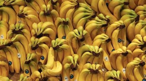 Il dilapide sa fortune à la fête foraine pour remporter... une banane en peluche | L'Idiot Du Jour | Scoop.it