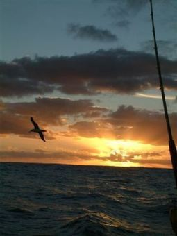 Nature's Perfect Gliding Machine: The Albatross « Earth Dr Reese ... | Antarctica | Scoop.it