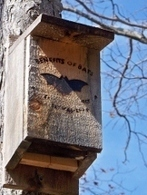 Bat house plans – Attract bats to your garden | Gardening Life | Scoop.it