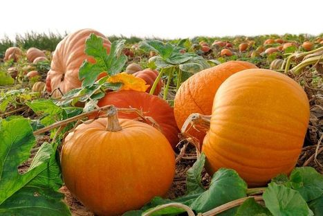 13 Reasons Why You Should Eat Pumpkins | eCellulitis | Healthy Food Tips & Tricks | Scoop.it