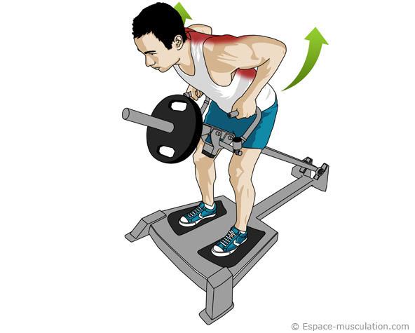 Rowing avec la barre en T - Musculation | MMA F...