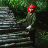 Environnement et developpement durable