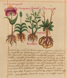 Botanists finally ditch Latin and paper, enter 21st century | Culturing Science, Scientific American Blog Network | Garden Libraries | Scoop.it