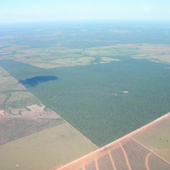 Living on Earth: Amazon Deforestation on the Rise | Sustain Our Earth | Scoop.it