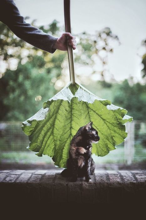 A #Summer With A #Cat - #Photo | Design Ideas | Scoop.it