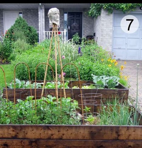 My Edible Front Garden. And How I Came Out As A Front Yard Veg Grower. - Empress of Dirt   edible landscaping   Scoop.it
