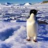 My Antarctic adventure