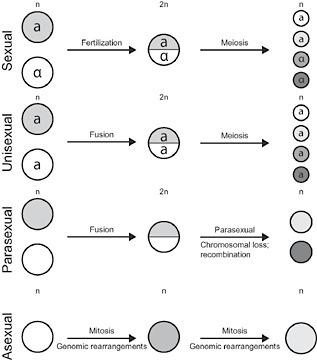 BioEssays: Sex or no sex: Evolutionary adaptation occurs regardless (2014) | Almanac Pests | Scoop.it