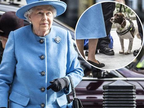PHOTOS Le sac à main d'Elizabeth II contrôlé par un chien des douanes lors d'une visite officielle - Voici | CaniCatNews-actualité | Scoop.it