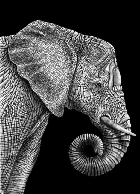 Stunning Animals Portraits Drawn using Countless Pens | About Art & Creativity | Scoop.it