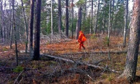 Access to Molpus forest becomes leverage in tax law fight   Timberland Investment   Scoop.it