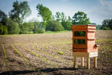 Brilliant new beehive harnesses solar energy to exterminate the colony's worst enemy | Bees and Honey | Scoop.it