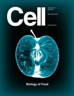Cell celebrates intersection of food and science in special issue | Food Science and Technology | Scoop.it